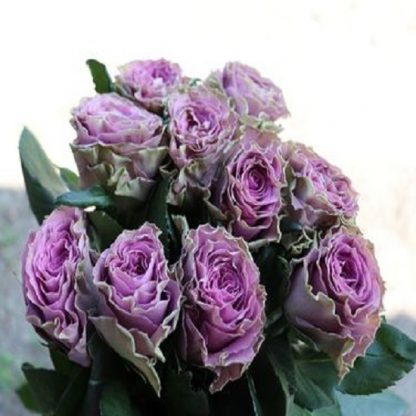 саженец Роза Византия вид1